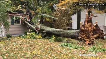 Tree topples over and crashes on house