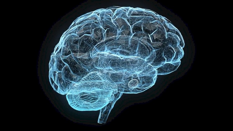 New Ethical Concerns Are Raised About Lab-Grown Mini-Brains