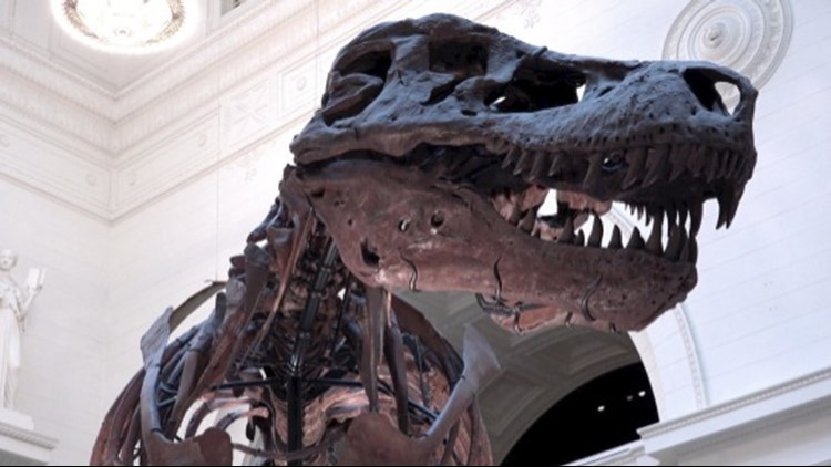 If an Asteroid Hadn't Wiped Them Out, Dinosaurs May Have Continued to Dominate the Earth