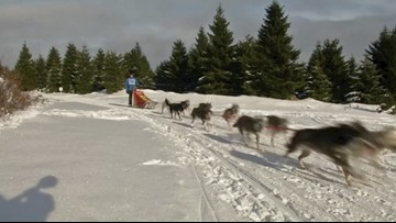 Mush Madness! Dog Sledders From Around Europe Gather in Czech Republic for Race!