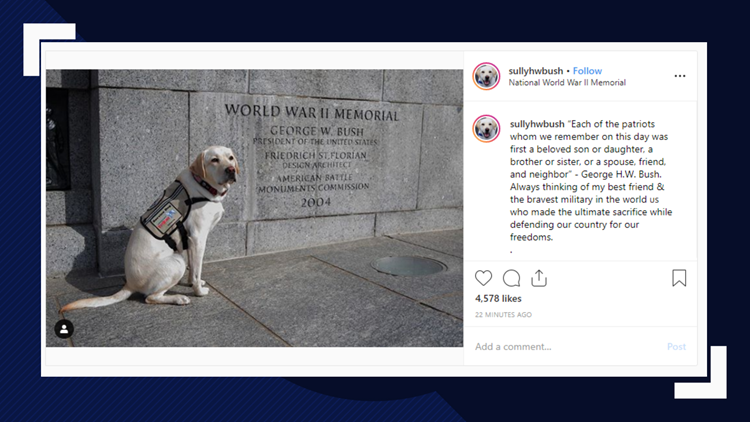 Sully the service dog honors George H.W. Bush on Memorial Day