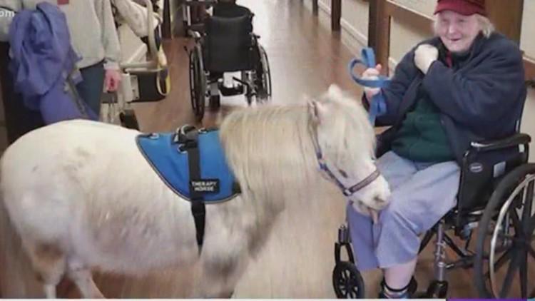 Therapy animal service hurting amid coronavirus shutdowns