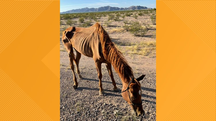 'I've never seen one that bad': Starving horse rescued near Gila Bend
