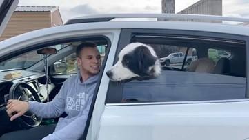 Three-legged dog finds foster home during coronavirus outbreak