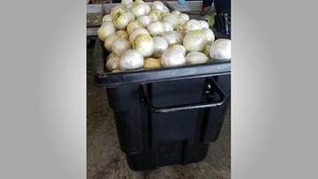 3,700 pounds of marijuana found in lettuce shipment