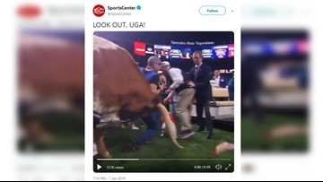 WATCH: Bevo charges Georgia bulldogs mascot, reporters and media scatter