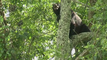 Tourists in the Smokies learn about bear safety