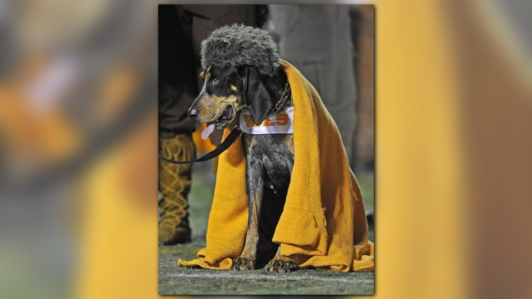 Smokey with a hat and blanket