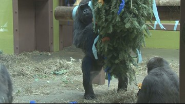 Zoo animals enjoy Christmas tree treats