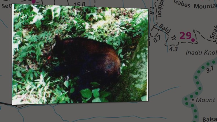 Records: Family used clothes as bandages to stop bleeding after bear attack in Great Smoky Mountains