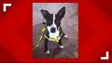 2 The Rescue: Rocko Wants a Forever Home