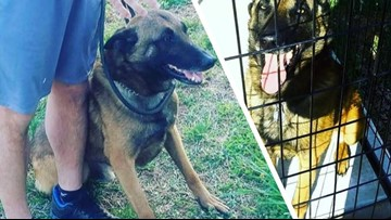 Greensboro Police K-9 'Rambo' Dies After Being Hit By Car While Chasing Robbery Suspect