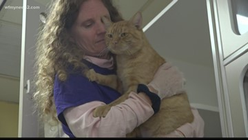 Guilford County Working To Introduce New Technology To Help Pets Find Homes