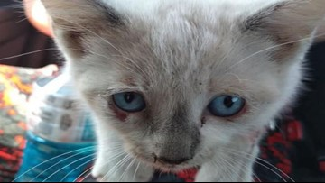 Kittens Being Thrown From a NC Bridge, Sheriff Says
