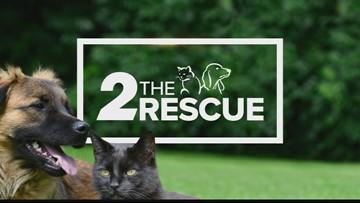 2 The Rescue: Meet Beatle