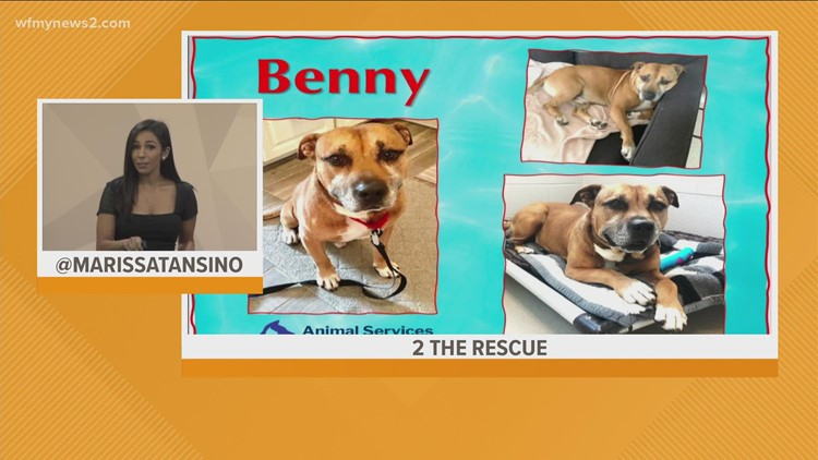 Meet Benny: 2 the Rescue