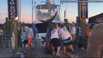 The 'Top Dog' at Big Rock Fishing Tournament Reels in 914-Pound Blue Marlin
