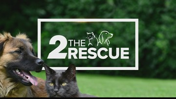 2 The Rescue: Let's Get Tom Adopted