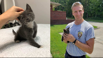 Kitten Gets Stuck Under Car, Finds New Home With Greensboro Firefighter Who Saved Him