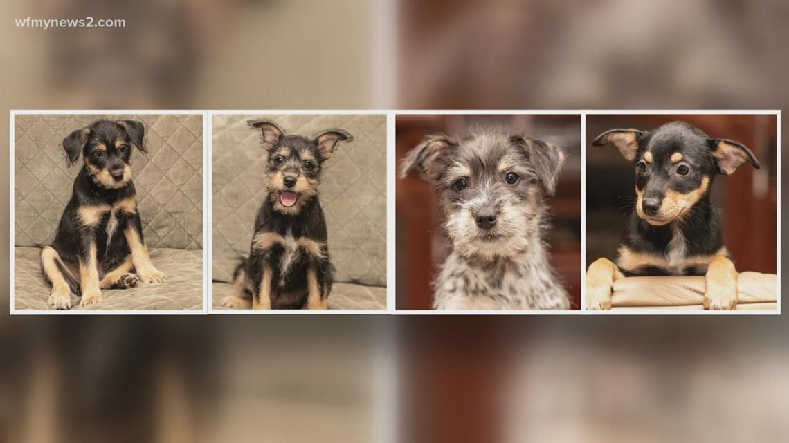 Meet Gordo, Lizzie, Isabel and Miranda: 2 the Rescue