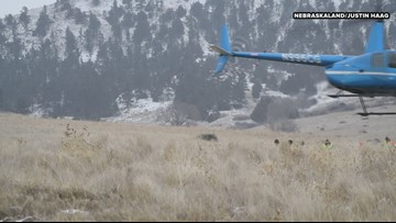 Ewe Flying! Nebraska Has Unique Sheep Shuttle