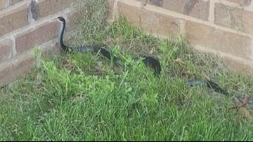Snakes In The Yard And Other FAQs
