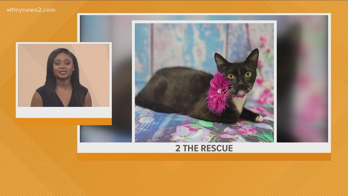 Meet Saffron: 2 The Rescue