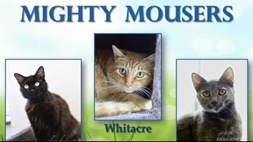 2 The Rescue: Meet the Mighty Mousers