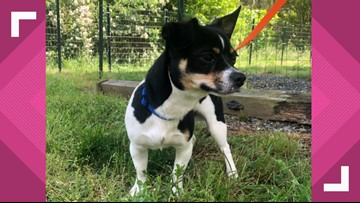 2 The Rescue: Oreo Needs A Forever Home