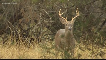 Bullets From Illegal Deer Hunting Damage Apartments, Car in Whitsett: Police