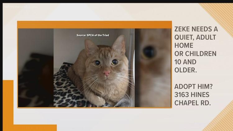 2 the Rescue: Meet Zeke