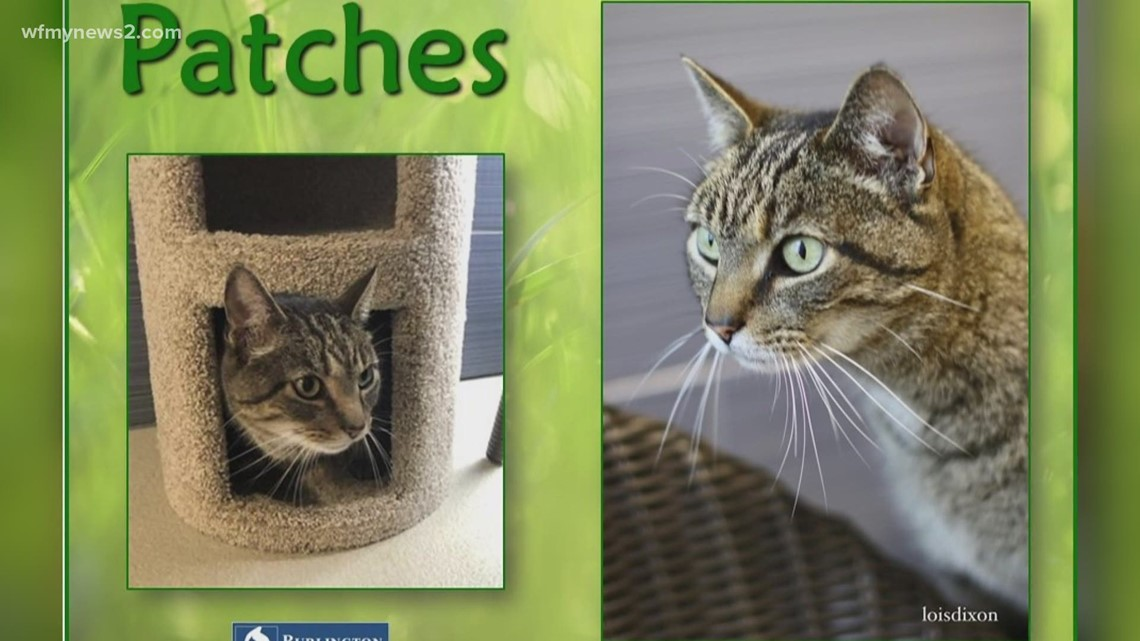 2 the Rescue: Meet Patches