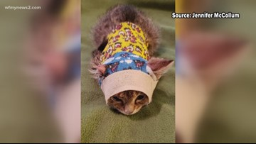 Kitten with chemical burns nursed back to health by Greensboro woman