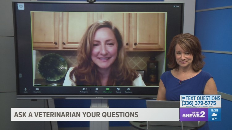 Emergency veterinarian answers your questions: Part 2