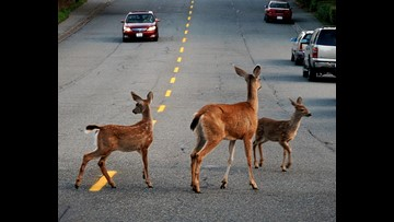 VERIFY: Do Deer Whistles, Other Deer Deterrents Work?