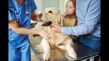 Veterinarian's Warning: Keep An Eye Out For 'Canine Upper Respiratory Infectious Disease'