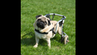 Living with a Handicapped Pet
