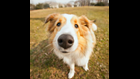 Is a Wet Nose a Sign of a Healthy Pet?