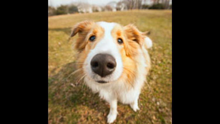 A wet nose enhances your pet's ability to identify scents.