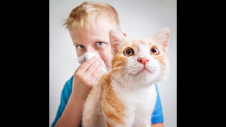 About three in 10 people who have allergies are allergic to cats and dogs, according to the Allergy and Asthma Foundation of America.