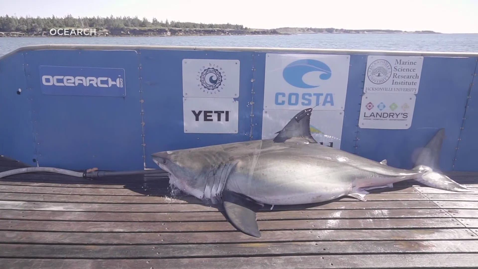 What S Attracting Mega Sharks To The Outer Banks Shipwrecks Wfmynews2 Com