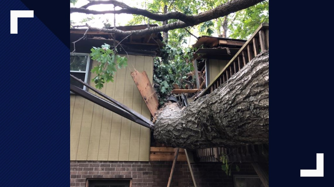 Tree damage: Who pays after the storm?