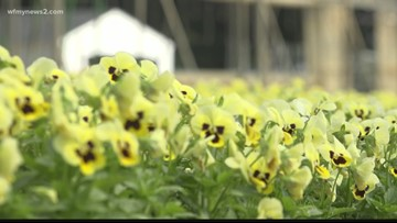 Growers Feel The Burn From 90-Degree Temperatures In October