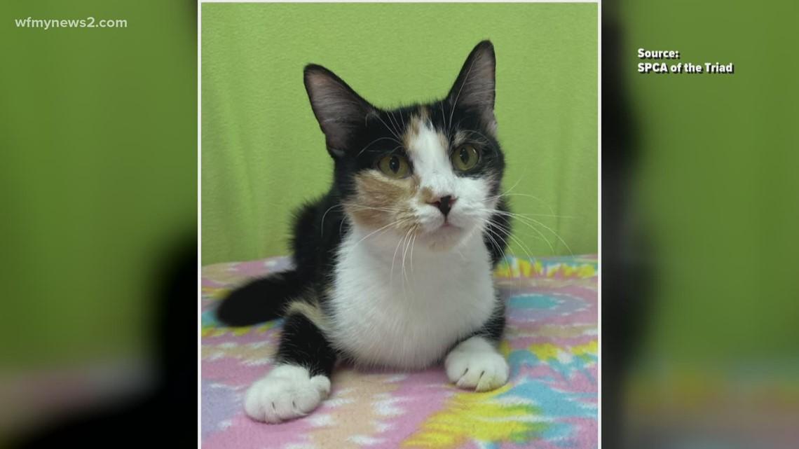 2 The Rescue Pet: Meet Sabina!