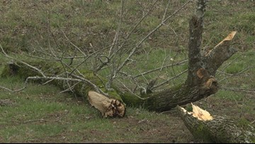 'It looked just like the movies' Randolph County woman took shelter in the backseat of her truck during a tornado