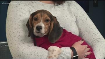 2 The Rescue: Meet Dakota