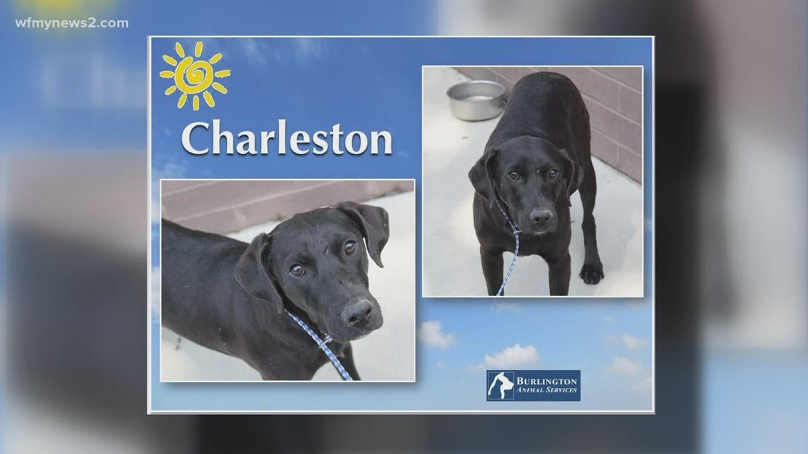 2 The Rescue: Meet Charleston