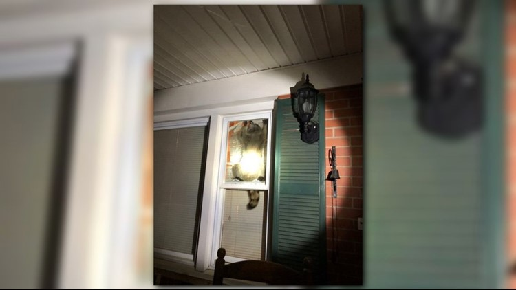 High Point Police Tweeted A Photo Of The Masked Suspect They Say He Broke In