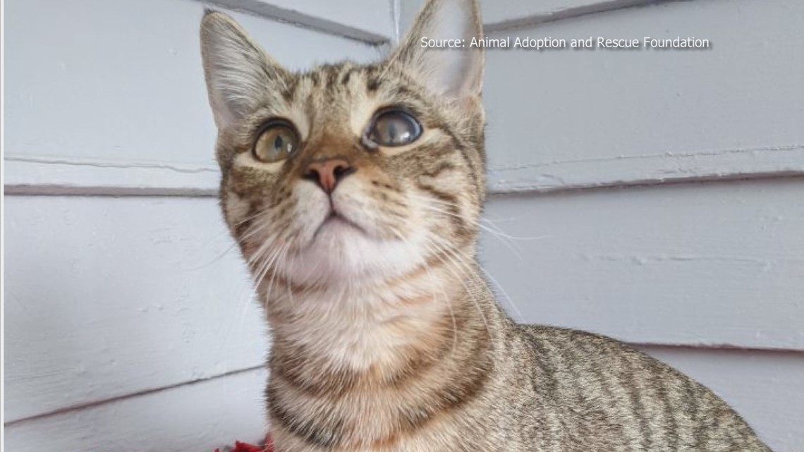 2 The Rescue Pet: Meet Paris!