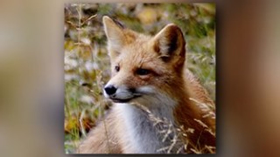How To Get Rid Of Fox Smell In Garden - Garden Ftempo